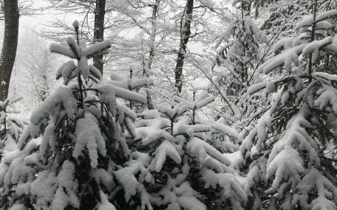 Technisch Tauchen im heimischen Winter – Der Kälteschutz